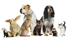 Business and jobs Featured  8-300x161 Shuttle taxi service soon for pets in Dubai
